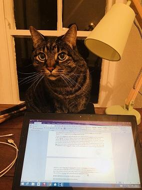Stewart Cat